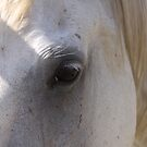 Eye of a Grey by StaceyH