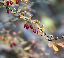 Natures Berries by SharonLMadison