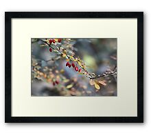 Natures Berries Framed Print