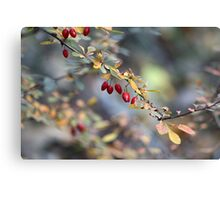 Natures Berries Canvas Print