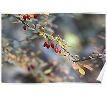 Natures Berries Poster