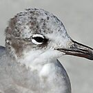Laughing gull portrait in black and white! by jozi1