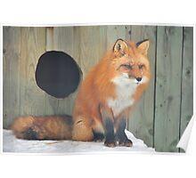 Fox # 2 Poster