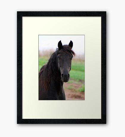 Farley, my black beauty Framed Print