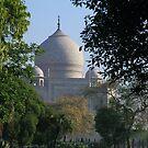 The Taj amongst the trees. by John Dalkin