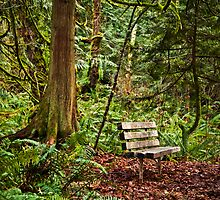 Forest Bench - Burfoot Park by Lynnette Peizer
