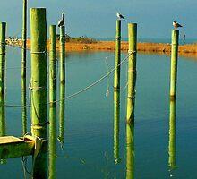 dockside reflections by tamarama