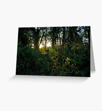 English Woodland Greeting Card