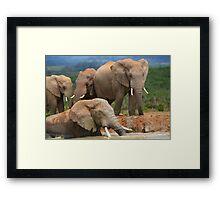 Afternoon Bath - African Elephants Framed Print
