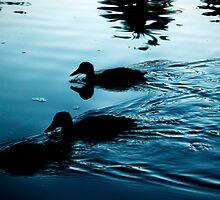 Hawaiian Ducks by Josh Kennedy