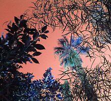 PINK SKY AT NIGHT  by Sherri     Nicholas