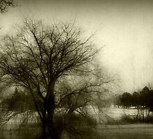 Calm before the storm!!! © by Dawn M. Becker