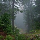 Mist in the Forest by AnnDixon