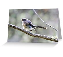 Juvenile Grey Fantail at the pond Greeting Card