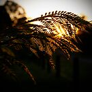 Sunray through a Fern by Josh Kennedy