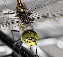 Dragonfly by Emily Jansen