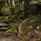 Eurobin Falls, Mt Buffalo, Victoria, Australia by Bruce Langdon