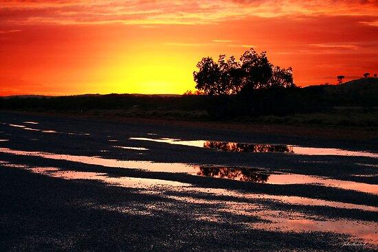 Tree at Sunrise by Julia Harwood