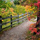 Fall Forest Stroll by Debbie  Maglothin