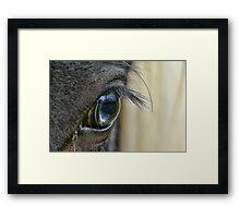 Blue Eyed Pony Framed Print