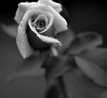 Enchanting by Natalie Ord
