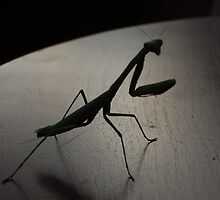 Praying Mantis - The Alien by Lisa McLain