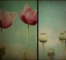 ~ Poppy ~ by Lynda Heins