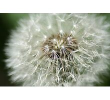 Dandelion Perfection of Beauty Photographic Print