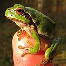 Tree-frog by fenist