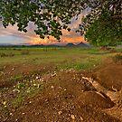 Poplar View by Rob  Southey