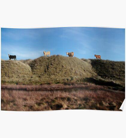 highest pasture Poster