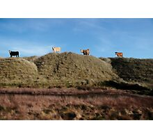 highest pasture Photographic Print