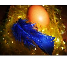 Hatching a Blue Chick?  Photographic Print