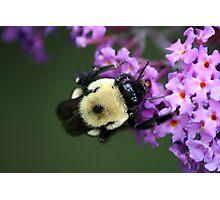 Buzzy Busy Bumble Bee Macro Photographic Print