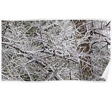 Trees with Ice Poster