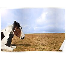 horse resting Poster
