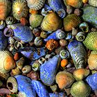 Shells of the world by Brian  Moriarty