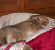 sleepy bunny by Jon Lees