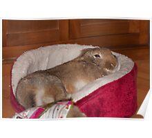 sleepy bunny Poster