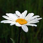 Flower Close Up by montydawson