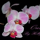 Orchids by Holly Werner