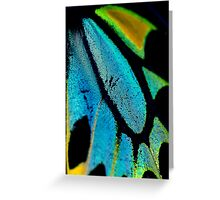 Cairns Birdwing Detail II Greeting Card