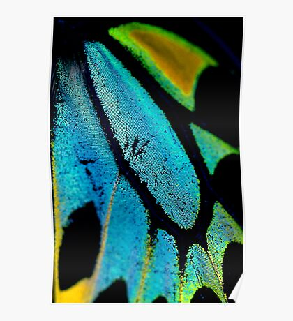 Cairns Birdwing Detail II Poster