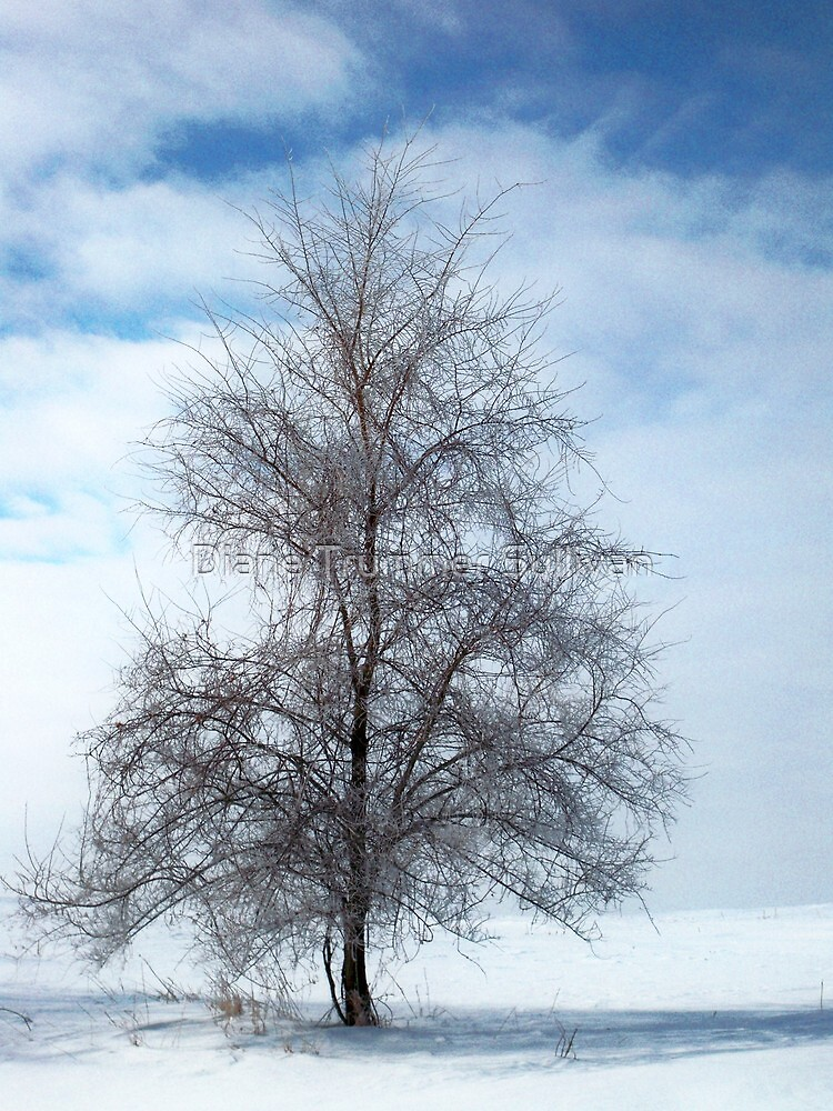 Frosty Tree by Diane Trummer Sullivan