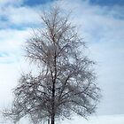 Frosty Tree by Diane Trummer Sullivan