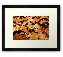 Beautiful Flower Chafer Scarab Beetle on Leaf Litter Framed Print