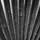 Botanical Abstracts 1 by Karl Eschenbach
