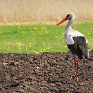 A walk through the fields by fenist