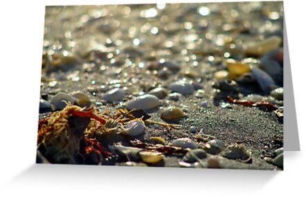 On the Beach by Kim McClain Gregal