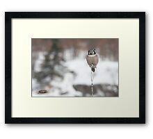 Frosty Habitat Framed Print
